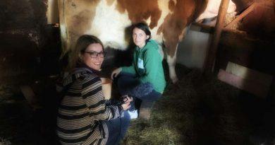 (VIDEO) Rtv Novi Pazar, porodici Šuman poklonila kravu. Do Kurban bajrama, trebala bi početi izgradnja nove kuće!
